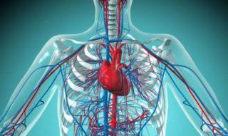 Почему болит кость грудины посередине при надавливании у мужчин и женщин