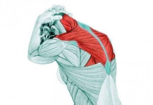 Болит плечо и лопатка и отдает в руку