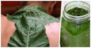 Лечение остеохондроза позвоночника листьями хрена