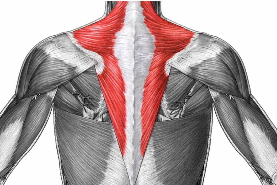найти снять трапециевидная мышца картинки популярные синие драгоценные