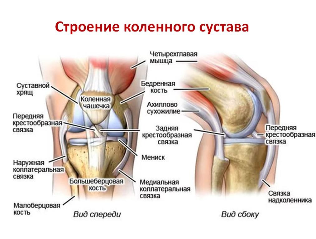 Боль в колене с внутренней стороны ноги